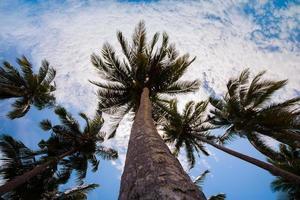 palmeras en el cielo foto