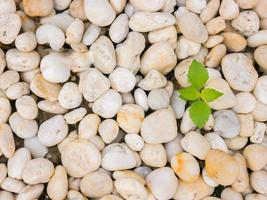 Green plant growing through rocks