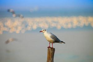 Seagull at golden hour photo