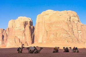 Paisaje desértico con camellos en Wadi Rum, Jordania