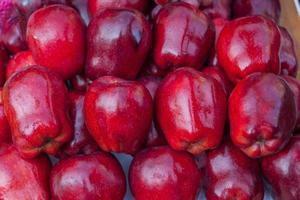 Close-up of red apples photo
