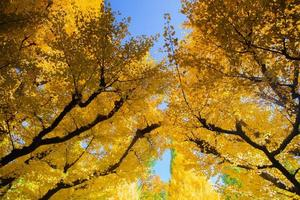 Yellow trees against a blue sky
