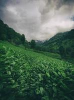 Green fields on a sloping mountain photo