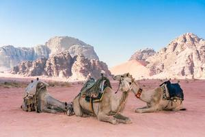 Desert landscape with camels in the Wadi Rum, Jordan photo