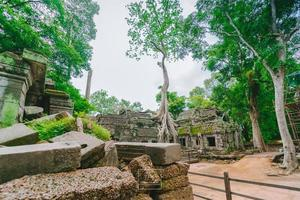 Ta Prohm temple overgrown with trees in Angkor, Siem Reap, Cambodia