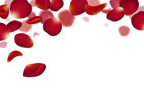 Pétalos de rosa roja cayendo sobre fondo blanco ilustración vectorial