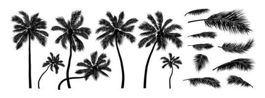 Silueta de árbol de coco sobre fondo blanco ilustración vectorial