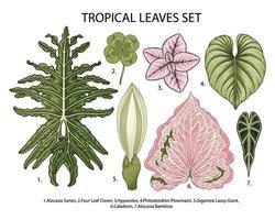 hojas set vector ilustración botánica, plantas exóticas tropicales, follaje de la selva aislado sobre fondo blanco.