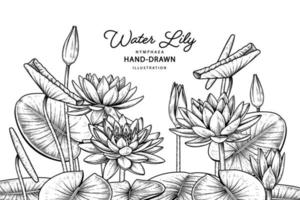 Water lily flower Hand Drawn Botanical vector