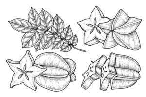 conjunto de carambola o carambola elementos dibujados a mano ilustración botánica vector