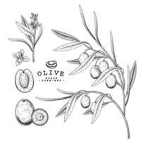 Vector Sketch olive tree Hand Drawn Botanical decorative set