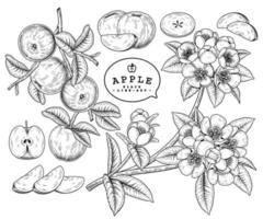 vector bosquejo manzana fruta y flor dibujado a mano conjunto decorativo botánico