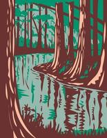 Cedar Creek at the Congaree National Park in Central South Carolina United States of America WPA Poster Art