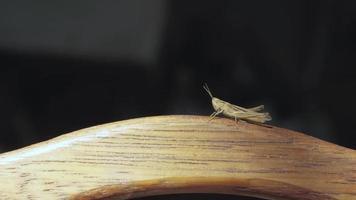 gafanhoto em uma placa de madeira