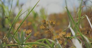 flores silvestres na grama verde video