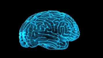 Escaneo del cerebro humano 3D y rotación 360 con lazo alfa