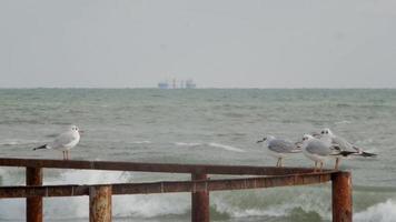 bando de gaivotas à beira-mar