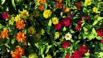 flores de colores en el jardín video