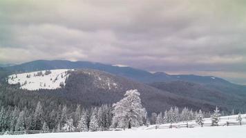 la forêt de montagne d'hiver