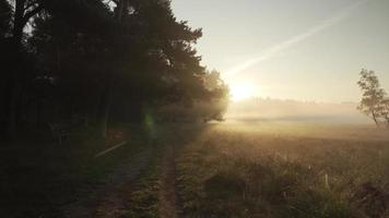 A dark path next to a open field covered in morning fog video