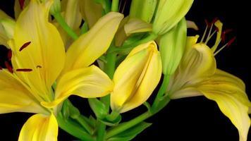 hermosas flores de lirio amarillo