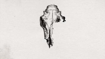cabeça de crânio de touro abstrato desenho animação de fundo