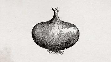 cebolla vegetal dibujada a mano con textura de tinta