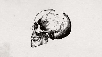 cabeça do crânio abstrato da velha ciência desenhando a animação do fundo video