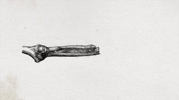 braço humano abstrato da velha ciência desenhando animação de fundo