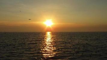 puesta de sol y gaviotas