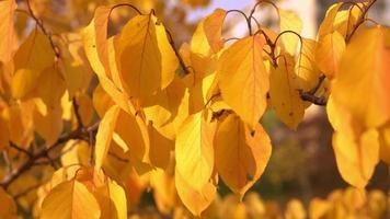 folhagem amarela no outono