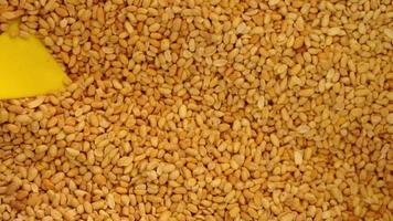 produção de amendoim de perto