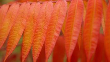 folhagem colorida balançando ao vento