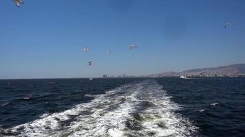 gaivotas livres no céu da cidade