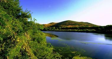 paisaje de plantas de lago verde