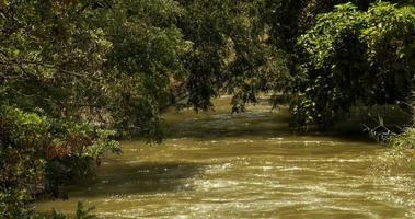 Fluss und Bäume Blätter video