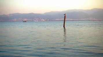 Bird Perched On A Pole In The Sea