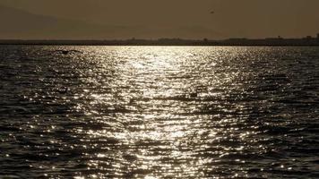gaivotas voando na praia ao pôr do sol