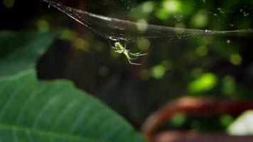 pequeña araña verde en el jardín video