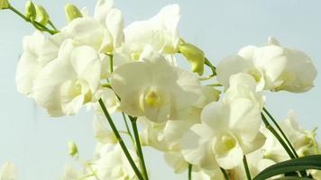 orquídea blanca en el jardín video
