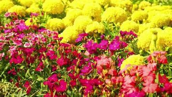 fiori colorati in giardino