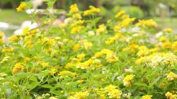 fiori gialli alla luce del giorno