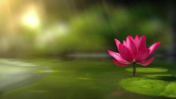 bellissimo sfondo di loto