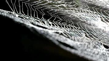 Regentropfen auf Spinnennetz
