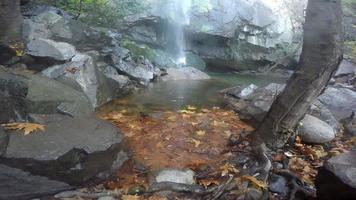 cascada en la naturaleza y rocas video