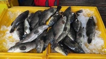 pescado en el mercado