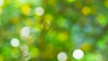 desenfoque de jardín verde video