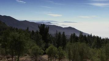 uma floresta de pinheiros video
