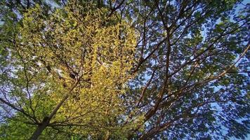 grandes arboles verdes