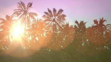 Sun and tropical palms video